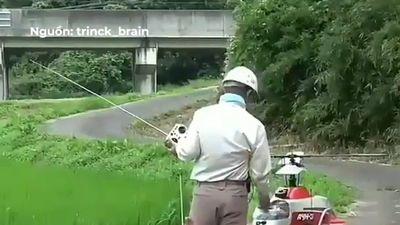 Nông dân Nhật Bản điều khiển trực thăng, phun thuốc trừ sâu