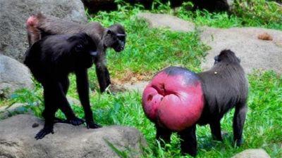 Chuyện yêu đương lạ độc không tưởng trong thế giới động vật