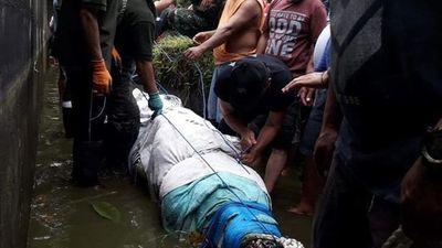 Làm thân với cá sấu 15 năm, cô gái vẫn gặp kết thảm khốc