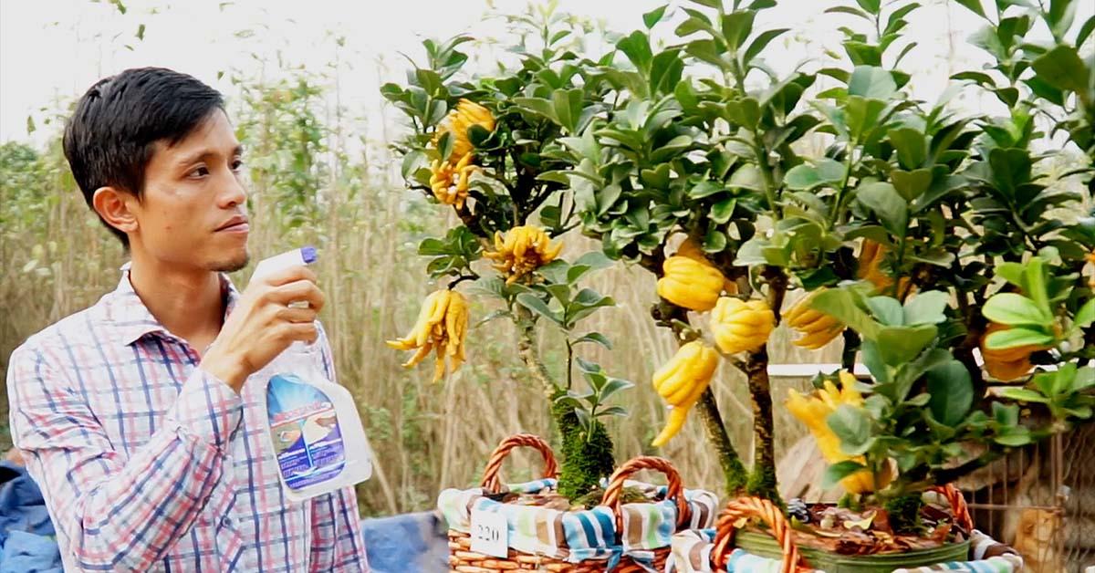 Clip: Phật thủ bonsai dáng độc lạ hút khách chơi dịp Tết