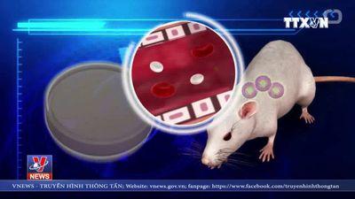 Mạch máu 3D giúp chữa trị bệnh