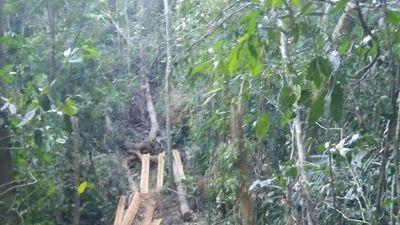 Đắk Nông: Điều tra vụ phá rừng quy mô lớn