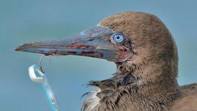Hãi hùng sự thực sau khuôn mặt đẫm máu của chim điên