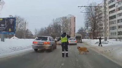 Cảnh sát giao thông dừng xe, giúp chú chó khập khiễng qua đường