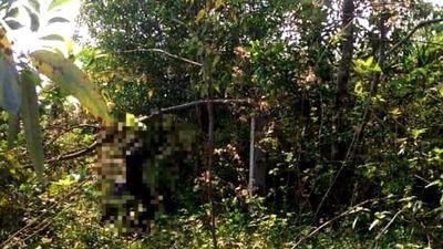 Bí ẩn danh tính thi thể treo cổ trong rừng tràm