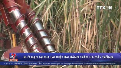 Khô hạn tại Gia Lai thiệt hại hàng trăm ha cây trồng