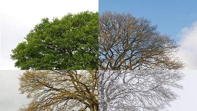 Hình ảnh 'độc' 4 mùa của cây sồi gây ấn tượng mạnh
