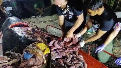 Clip: 'Hết hồn' lấy ra 40kg nhựa trong bụng cá voi