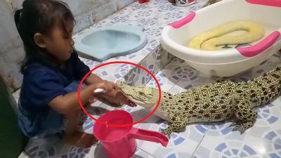 Clip: Bé gái đánh răng cho cá sấu khiến người xem choáng váng