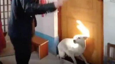 Chú rể số đen: Chật vật mãi không thể vào phòng đón dâu chỉ vì một chú chó nhỏ nằm lì trước cửa