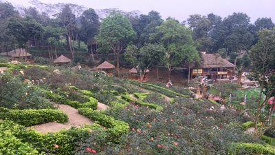 Ngỡ ngàng vẻ đẹp của thung lũng hoa hồng lớn nhất Việt Nam