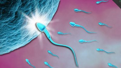 Quá trình 'chiến đấu' để gặp trứng của hàng triệu tinh trùng