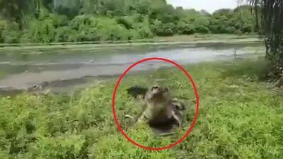 Cần thủ bỏ chạy thục mạng khi bị cá sấu lao lên bờ cướp mồi