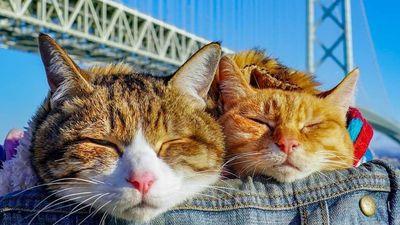 Hình sống ảo độc đáo của 2 con mèo béo phượt khắp Nhật Bản
