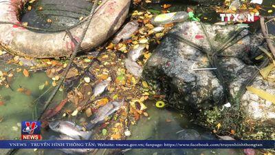 Cá chết dọc tuyến kênh Phú Lộc