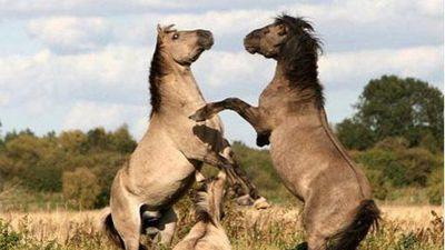 Nhân bản loài ngựa tiền sử từ mẫu máu còn sót lại trong băng vĩnh cửu