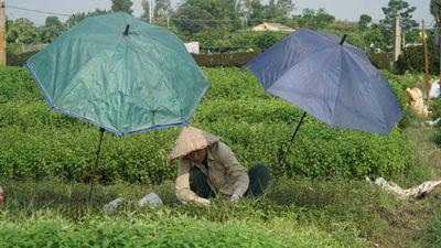 Ảnh, clip: Nông dân mang 'bảo bối' chống nắng 40 độ C ra đồng