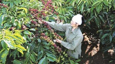 Cà phê Việt cần thân thiện môi trường