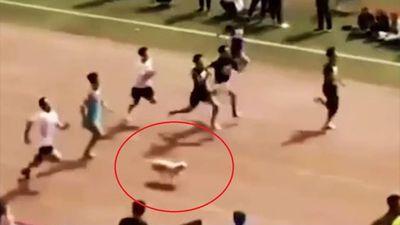 Chú chó hoang giành huy chương đồng trong cuộc đua 100 m