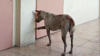 Cảm động chú chó trung thành ngồi đợi người bạn đã qua đời