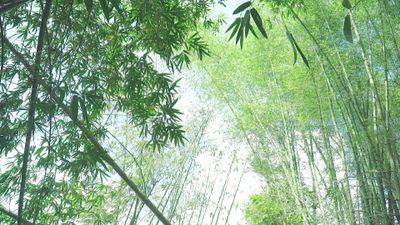 Bảo tàng sinh thái tre 10 ha đầu tiên ở Việt Nam