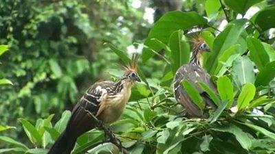 CLIP: Những loài chim độc đáo nhất thế giới