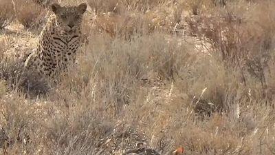 Mèo hoang từ kẻ đi săn trở thành kẻ bị săn