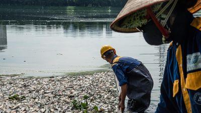 Vì sao cá chết liên tục trên các hồ ở Hà Nội?