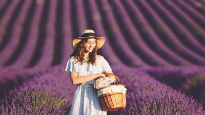 Cánh đồng hoa oải hương nhuộm tím sắc trời nước Pháp
