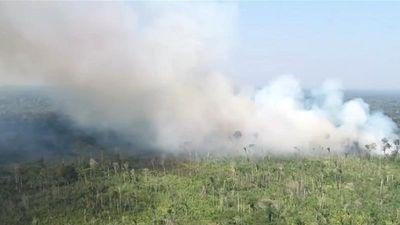 Rừng amazon hoang tàn sau khi bị lửa tàn phá