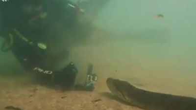 Thót tim cảnh thợ lặn đụng độ trăn Anaconda 7 mét dưới lòng sông