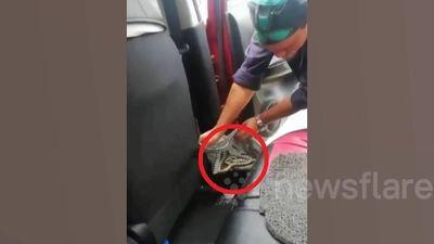Hoảng hồn phát hiện trăn trong xe mới