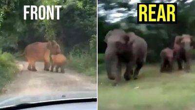 Tài xế ôtô sợ chết khiếp vì bị đàn voi quây kín