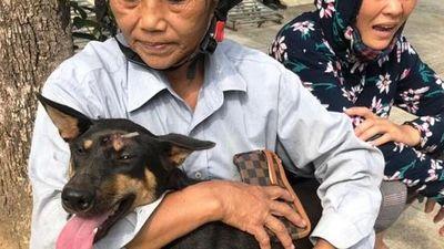 Vụ triệt phá băng nhóm trộm chó hơn 100 tấn: ACPA hỗ trợ chăm sóc chó bị thương