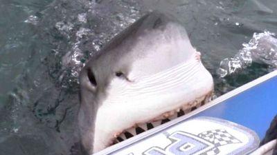 Câu trúng cá mập khiến nhóm bạn trẻ hoảng loạn