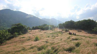 Đắk Lắk: Xuất hiện đồi cỏ hồng trên thảo nguyên M'đrắk