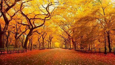 Cùng ngắm vẻ đẹp mùa thu trên khắp nước Mỹ