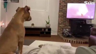 Chó 'khóc' khi xem bộ phim hoạt hình yêu thích gây sốt