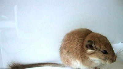 Động vật có vú và những kỷ lục 'đáng gờm' khó tin