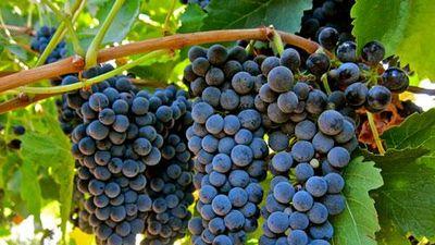 8 loại trái cây tốt nhất cho người thiếu máu