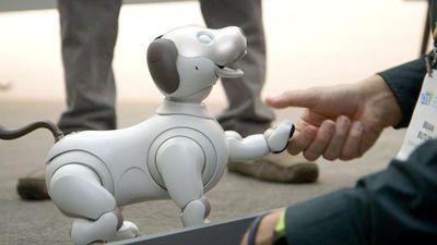 Chú chó robot Aibo có cảm xúc như thật lần đầu xuất hiện ở Việt Nam
