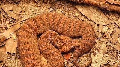Clip: Nếu gặp 5 loài rắn kì lạ này, bạn phải chạy thật nhanh