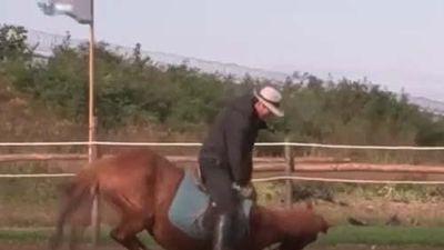 CLIP: Chú ngựa 'láu cá' nhất thế giới, có người cưỡi là lăn đùng ra giả chết