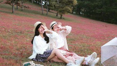 Huyện nào ở Lâm Đồng tổ chức mùa hội cỏ hồng?