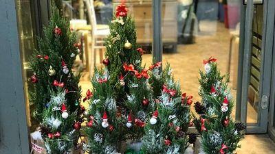 Giáng sinh đã về: Cây thông tươi chơi Noel giá cao vẫn 'cháy'
