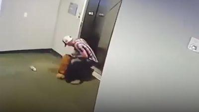 Người đàn ông nhanh trí giải cứu chú chó bị mắc kẹt thang máy
