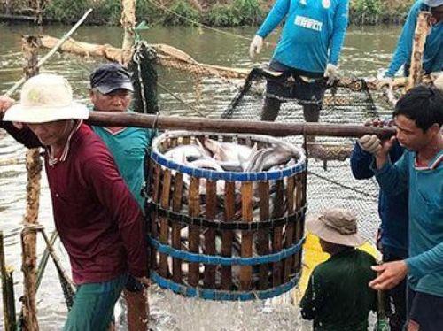 Mỹ áp thuế cá tra Việt Nam: Không công bằng và không có cơ sở
