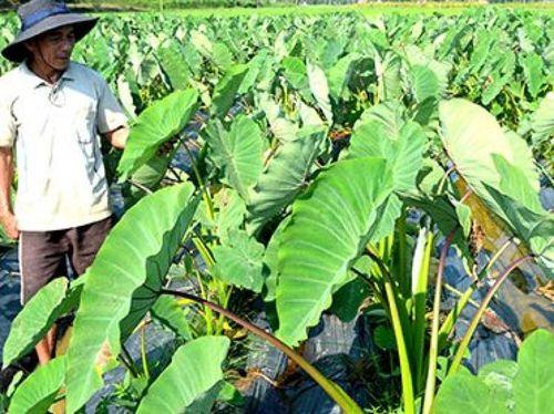 Chuyển đổi cây trồng, nuôi hươu thu nhập cao