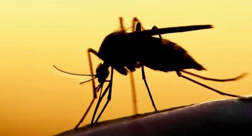 Tiêu diệt muỗi bằng biến đổi di truyền