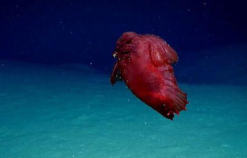 Phát hiện quái vật 'gà không đầu' đang bơi dưới đáy biển